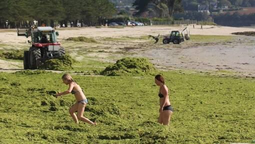 Algues vertes. Où en est-on dans le Finistère ?  (OF.fr-5/07/19-9h18)