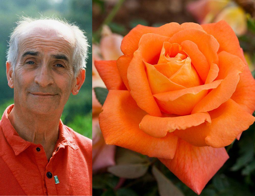 Résultat d'images pour rose louis de funes