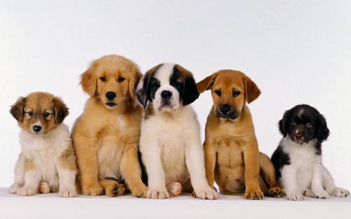 A . D . P . A . Association Départementale pour la Protection des Animaux