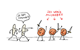"Le Coronavirus ""2019-NcOv"""