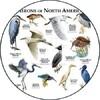 Oiseaux échassiers