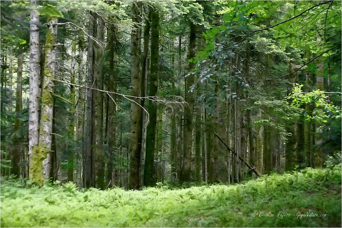 Loire: Les Bois Noirs depuis le col de St Thomas