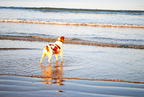 Seule sur la plage...