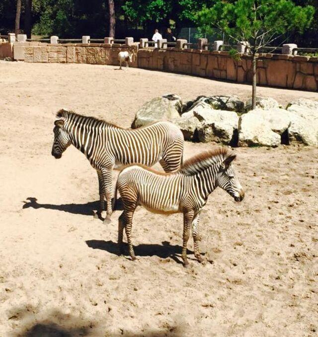 Allons au zoo de la Palmyre.