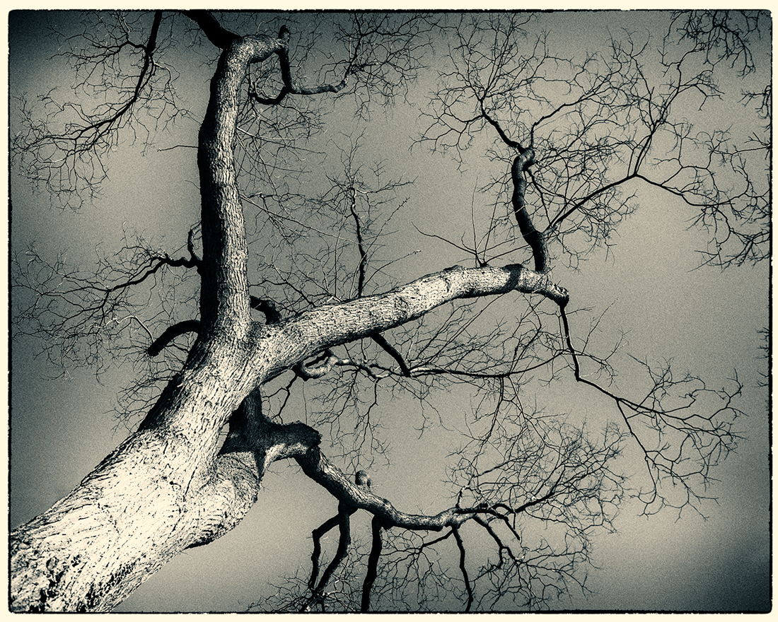 branches..