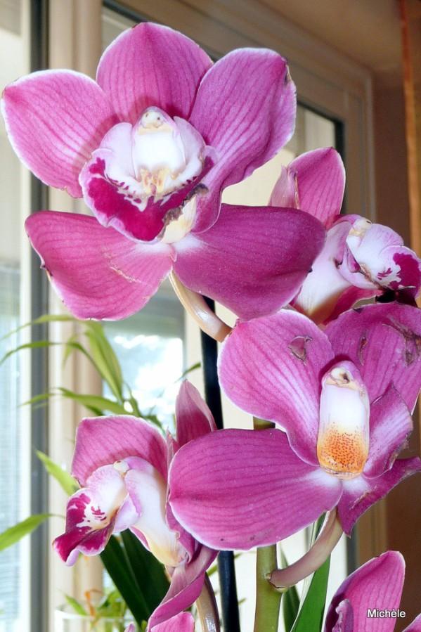 w01---Belle-orchidee.JPG