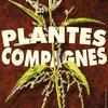 Plantes Compagnes Affiche.jpg