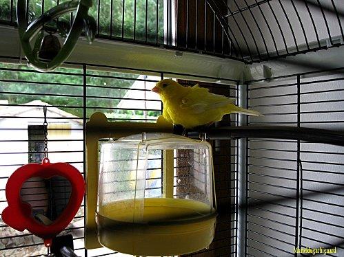Nettoyage-cage-fifi-juin-2011-1347--Copier-.JPG