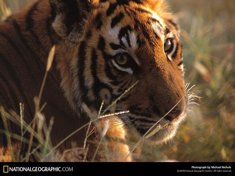 Images de Natl. Geographic 2