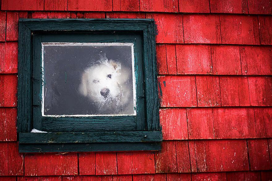 chien-blanc-soupirail