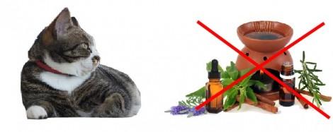 Les huiles essentielles et le chat
