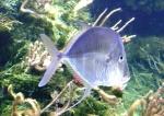 les poissons des tropiques