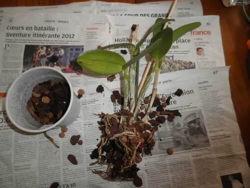 Ligotons une orchidée