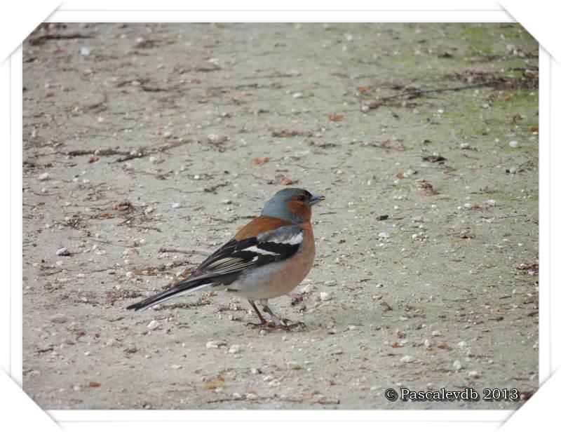 Symphonie printanière à la réserve ornithologique du Teich - 19/20