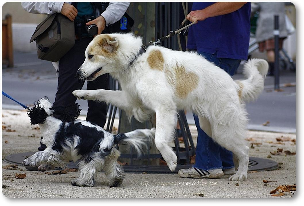 Bénédiction des maîtres animaliers et leurs animaux