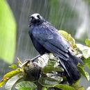 Sous la pluie (1) - Photo : Michaël