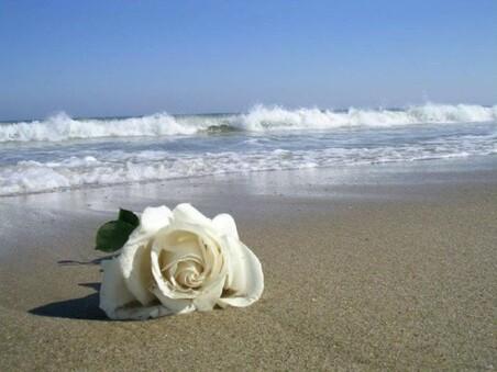 """Résultat de recherche d'images pour """"rose sur la plage"""""""