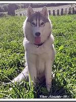 Kira (5,5 mois)