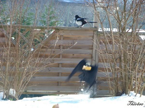 oiseaux--5-.JPG