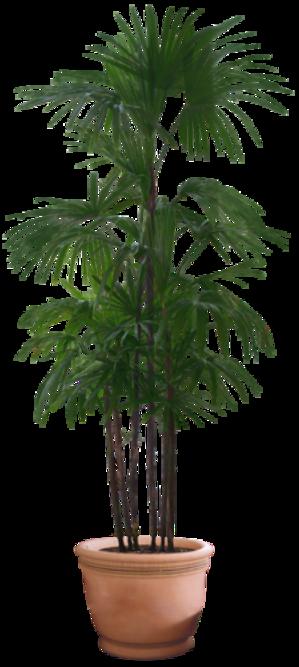 Verdure - Plantes Vertes Série 11