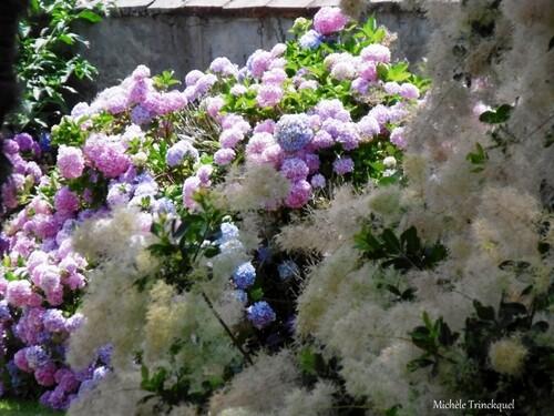 Une nouvelle balade fleurie le 9 juillet...