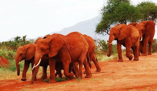 Quelle Est La Couleur De L'Éléphant Rouge ? - Joie Des Mots