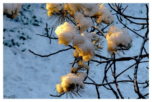 le 15 Janvier: OH  il neige!