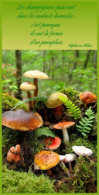 champignons ...