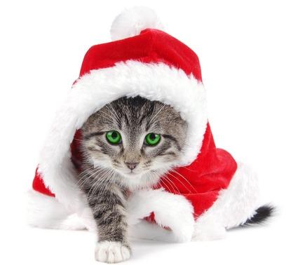 Noël Chez Les Chats !