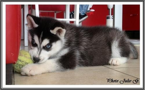 Taïka (2 mois)