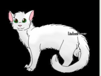 Description de chats LGDC III