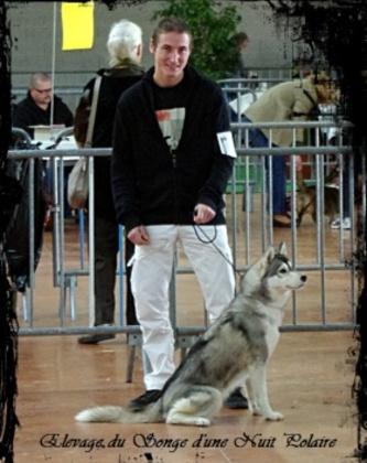 Glaska à l'Exposition canine de Castres (17 novembre 2012)