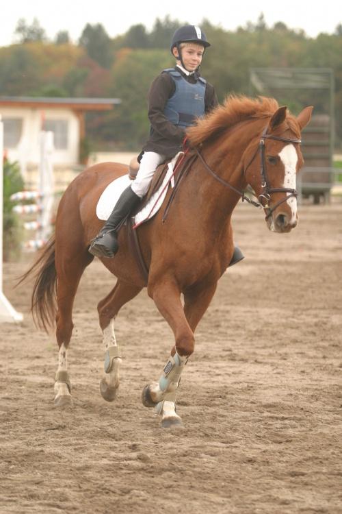 Nicolas Layec, un jeune cavalier de CSO : sport et sécurité !