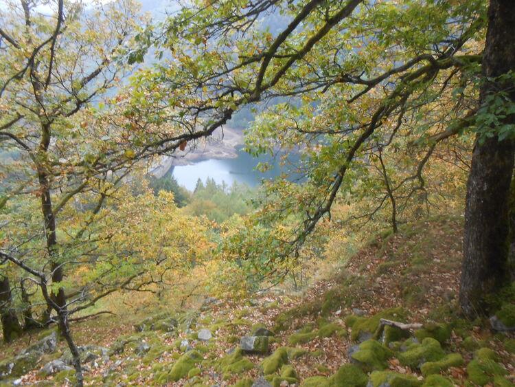 Vosges- les hauteurs du lac d'Alfeld