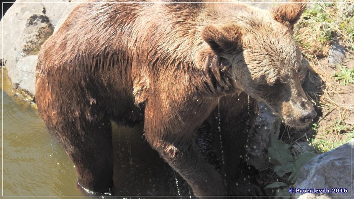 Zoo du Bassin d'Arcachon - Août 2016 - 6/15
