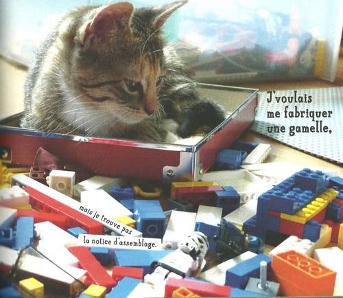 Les chats font aussi la fête!