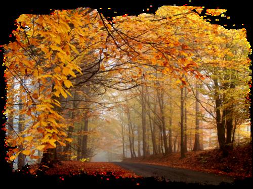Voici le joli temps d'automne !
