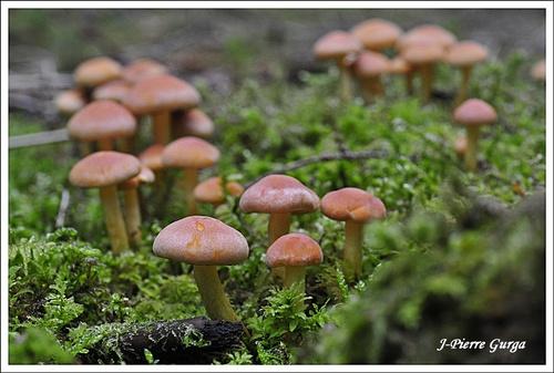 D'autres beaux champignons photographiés par Jean-Pierre Gurga en octobre 2012