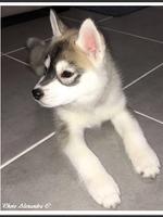 Nala (2 mois, chez ses nouveaux propriétaires)