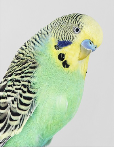 Le monde des oiseaux ...