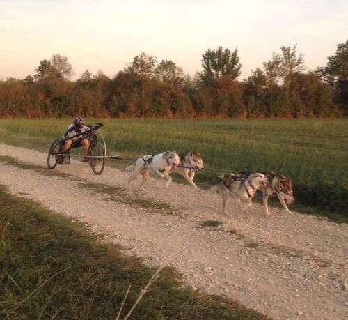 Course de chiens de traîneaux