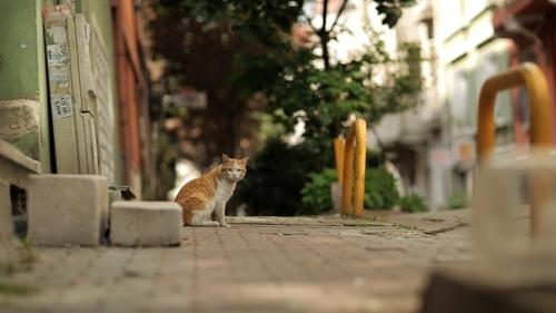 Faisons connaissance avec les chats d'Istamboul