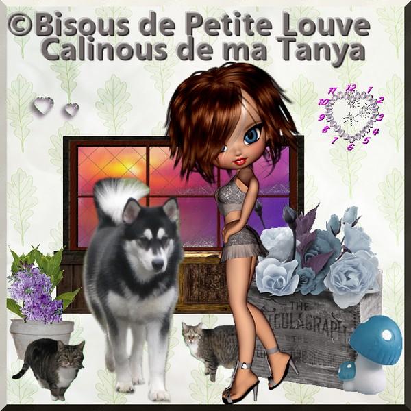 (-*♥*-)  Le sauvetage de 600 chiens et chats menacés d'euthanasie  (-*♥*-)