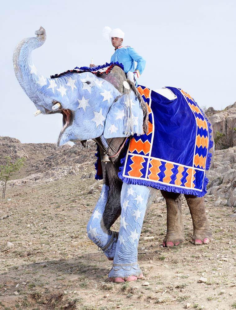charles-freger-painted-elephants-4