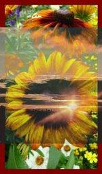 Pour les dix jours de soleil jaune qui arrivent youpi !