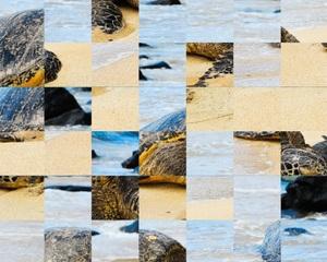 Jouer à Turtle on the beach puzzle