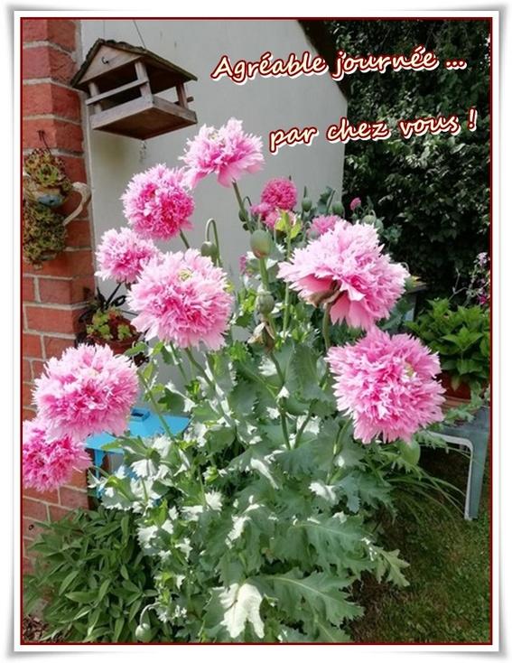 fleurs de juillet ...