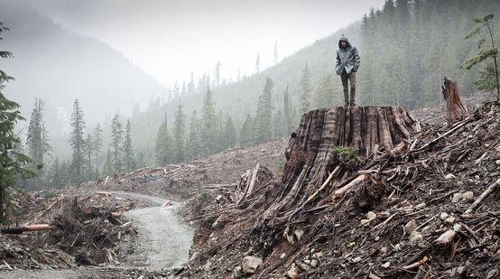 Abattage dans la forêt pluviale côtière sur l'île de Vancouver, Colombie britannique, Canada