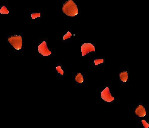 Pétales de Fleurs (nouveau)
