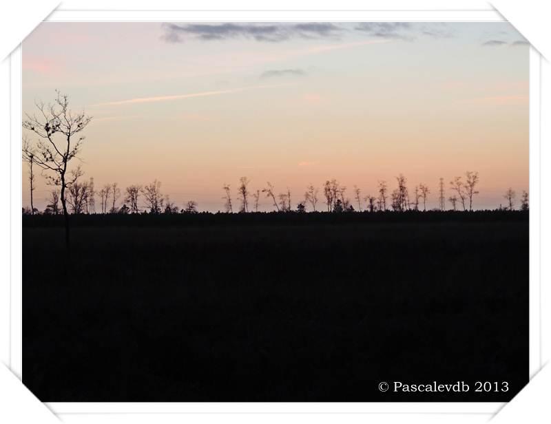 Brumes matinales, levers et couchers de soleil sur Le Barp - 1/2